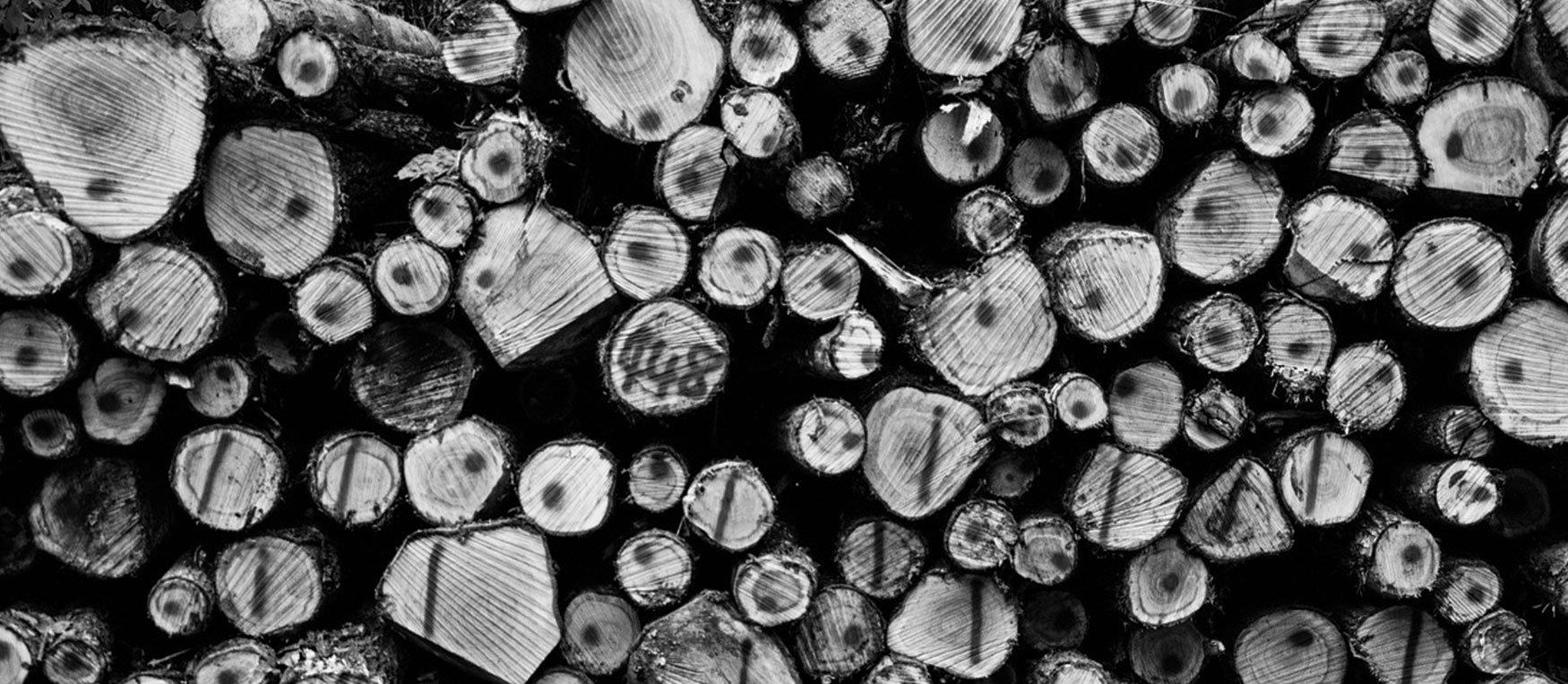 Corte de árboles - de leña